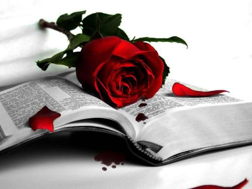 book and rose day