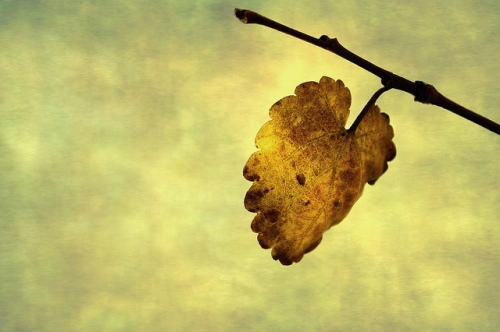 O Henry. The Last Leaf